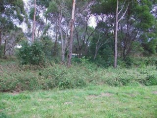 View profile: Lifestyle building block in natural bushland setting!