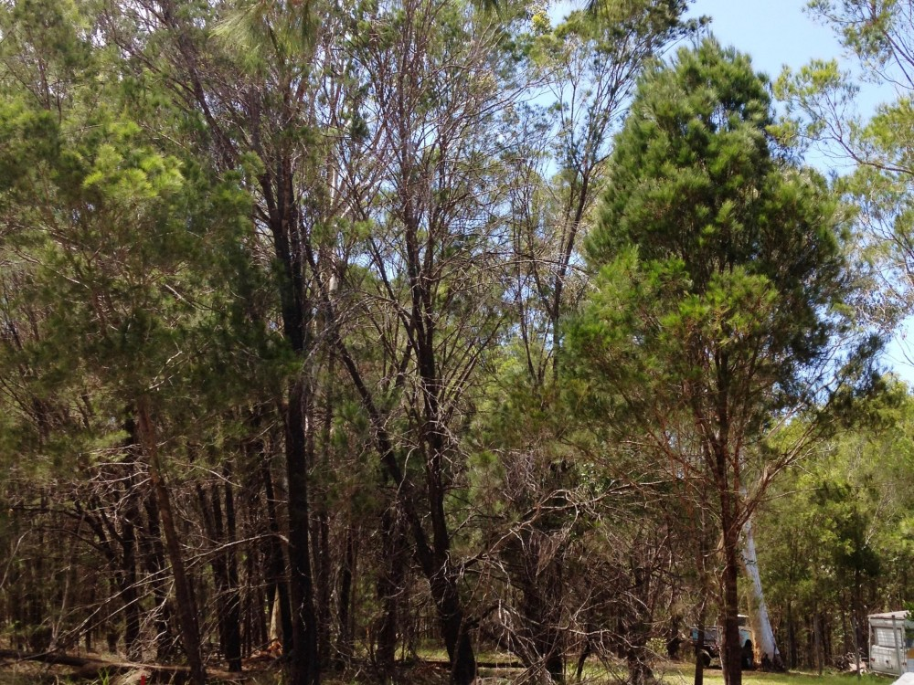 Great Block in a Natural Bushland Setting